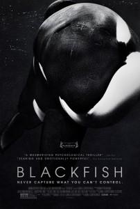 Blackfish Comes Into Light