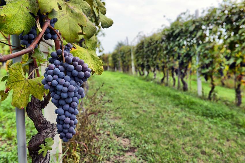 Sacramento Vineyard Tours