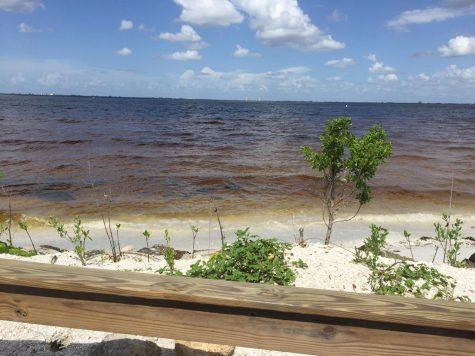 Red tide? More like dead tide