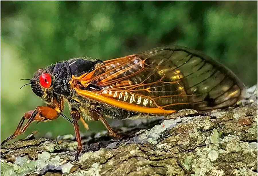 Insect Reemerges After 17 Years